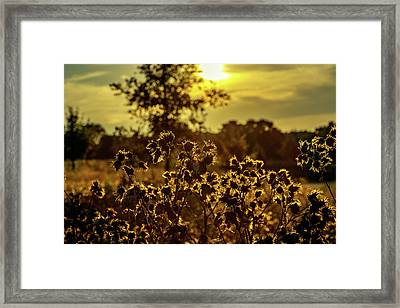 Wild Flowers And Sun Beams Framed Print