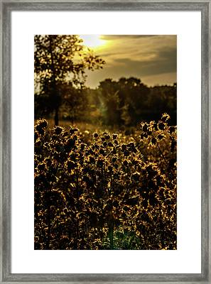 Wild Flowers And Sun Beams Portrait Framed Print