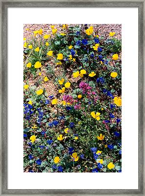 Wild Flowers Framed Print by Eliot LeBow