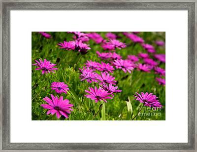 Wild Flowers Framed Print by Gaspar Avila