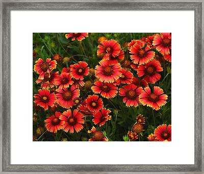 Wild Flowers In Field Color Art Print Framed Print by Randy Steele