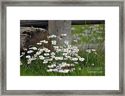 Wild Flowers  Framed Print by Juls Adams
