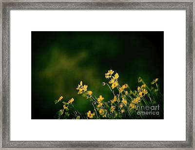 Framed Print featuring the photograph Evening Wild Flowers by Kelly Wade