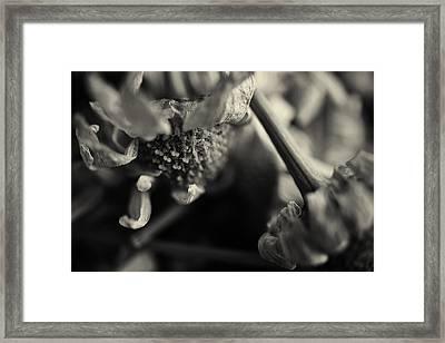 Wild Flowers Framed Print by Nicole Frischlich