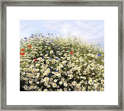 Wild Flowers Number One Framed Print