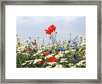 Wild Flowers Number Two Framed Print