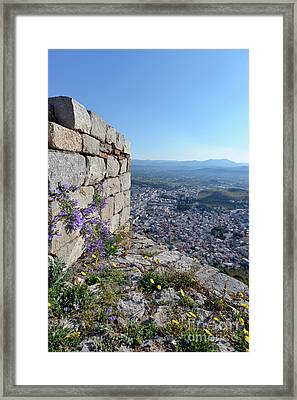 Wild Flowers On A Loophole In Palamidi Castle Framed Print
