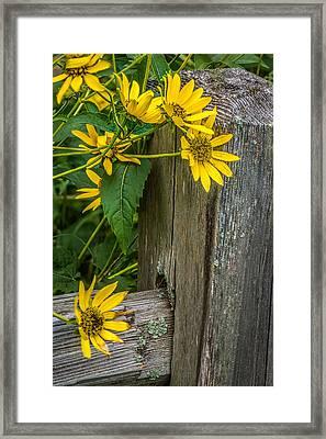 Wild Flowers Framed Print by Paul Freidlund