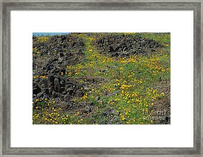 Wild Flowers Framed Print by Richard Verkuyl