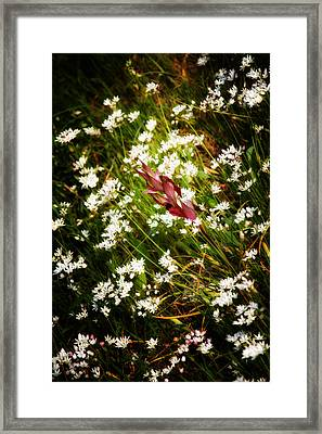 Wild Flowers Framed Print by Stelios Kleanthous