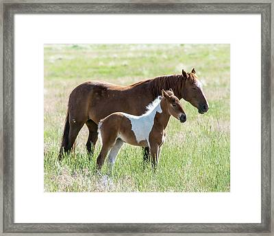 Framed Print featuring the photograph Wild Foal With A Horse Pattern  by Mary Hone