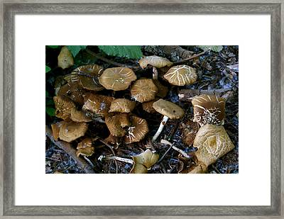 Wild Forest Mushroom Patch Framed Print by Sonja Anderson