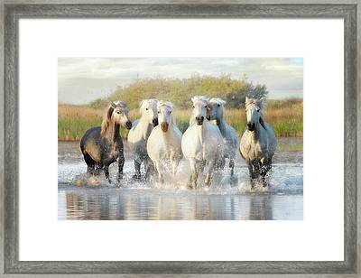 Wild Friends Framed Print