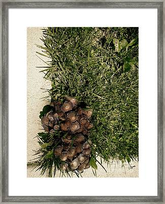 Wild Fungus Botany Hive  Framed Print by Steven Digman