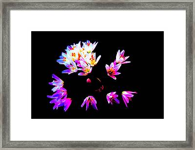 Wild Garlic Framed Print