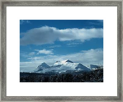 Wild Geese Over Calf Robe Framed Print