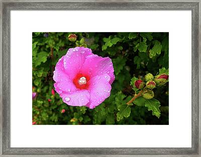 Framed Print featuring the photograph Wild Glory by Roger Bester