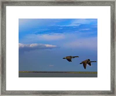 Wild Goose Chase Framed Print