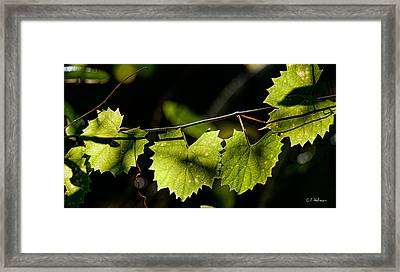Wild Grape Leaves Framed Print by Christopher Holmes