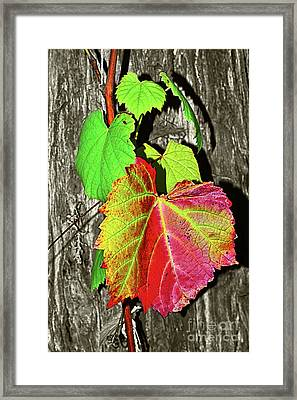 Framed Print featuring the photograph Wild Grape Vine By Kaye Menner by Kaye Menner