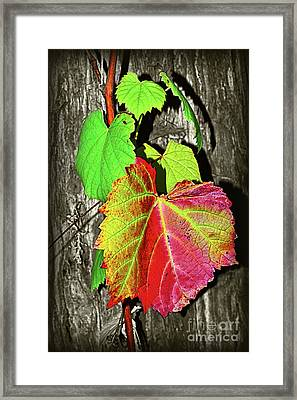 Framed Print featuring the photograph Wild Grape Vine II By Kaye Menner by Kaye Menner
