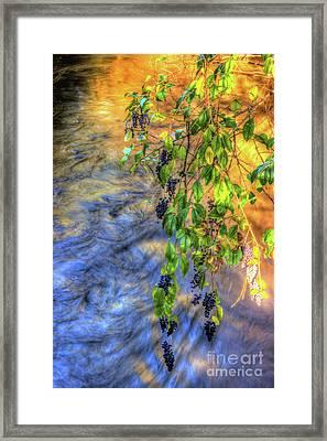 Wild Grapes Framed Print