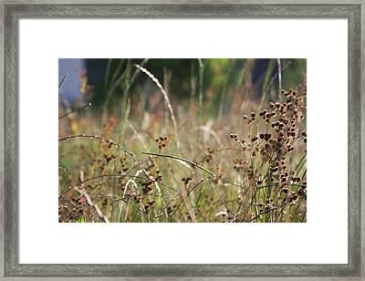 Wild Grass And Burrs Framed Print by Jonathan Kotinek