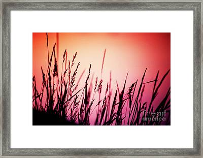 Framed Print featuring the photograph Wild Grasses by Scott Kemper