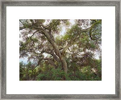 Framed Print featuring the photograph Wild Green Yonder by Alexander Kunz