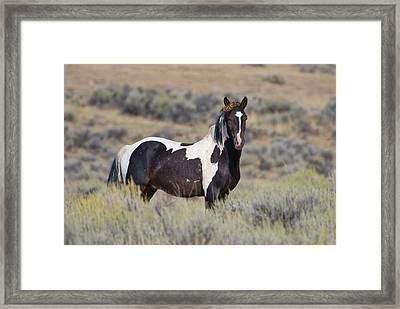 Wild Horse 14 Framed Print