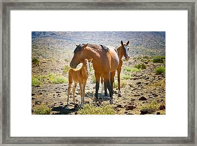Wild Horse Family Framed Print