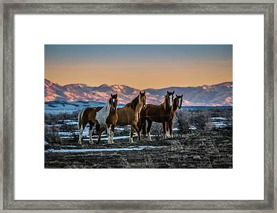 Wild Horse Group Framed Print