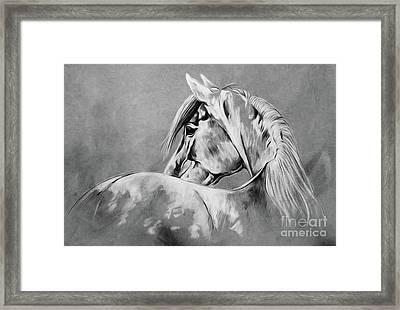 Wild Horse   Framed Print by Gull G