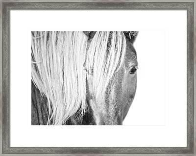 Wild Horse Portrait Framed Print