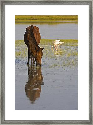 Wild Horse Reflection Framed Print by Bob Decker