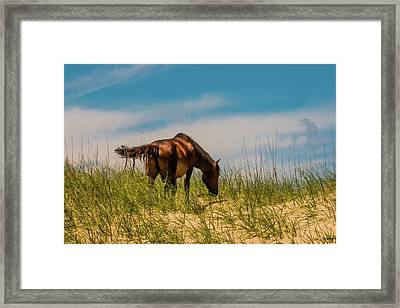Wild Horse And Dragon Flies Framed Print
