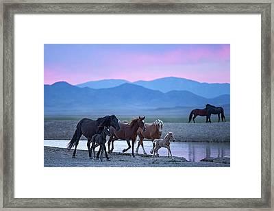 Wild Horse Sunrise Framed Print