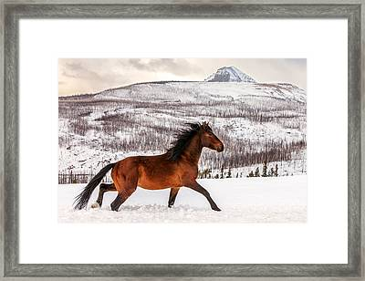 Wild Horse Framed Print by Todd Klassy