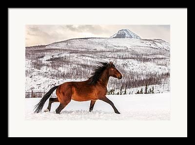 Horse Photographs Framed Prints