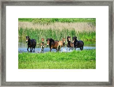 Wild Horses 6 Framed Print