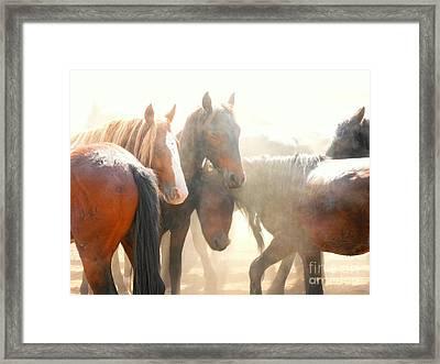 Wild Horses - Australian Brumbies 2 Framed Print by Lexa Harpell