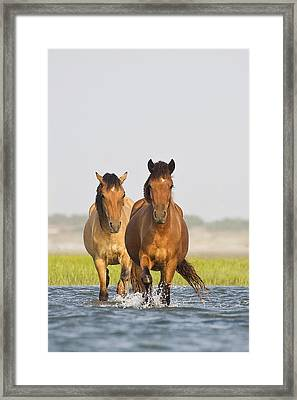 Framed Print featuring the photograph Wild Horses by Bob Decker