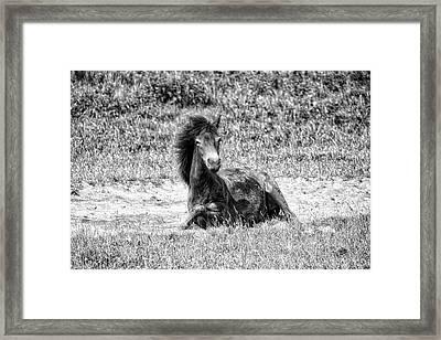Wild Horses Bw3 Framed Print