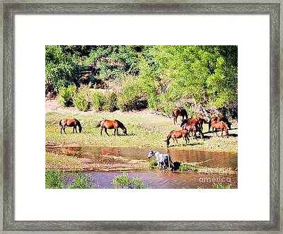 Wild Horses Grazing At Waterhole  Framed Print