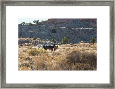 Wild Horses In Monument Valley Framed Print by Jon Glaser