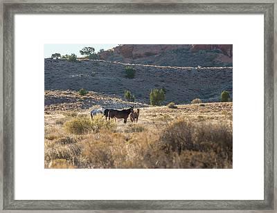 Wild Horses In Monument Valley Framed Print