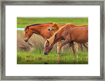 Wild Horses Of Assateague Island Framed Print by Rick Berk