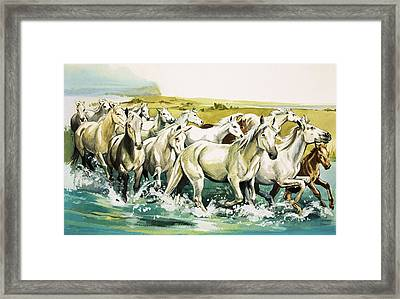 Wild Horses Of The Camargue Framed Print by English School
