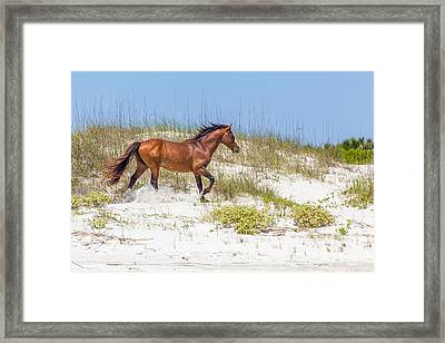 Wild Horses On Cumberland Island 2 Framed Print by Gestalt Imagery