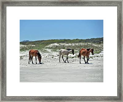 Wild Horses On The Beach Framed Print